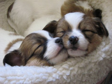 Sleepy_Puppies