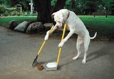 DogCleaningPoop