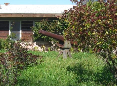 overgrown-yard