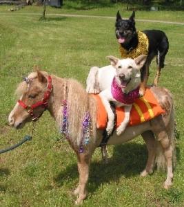 dog_and_pony_show